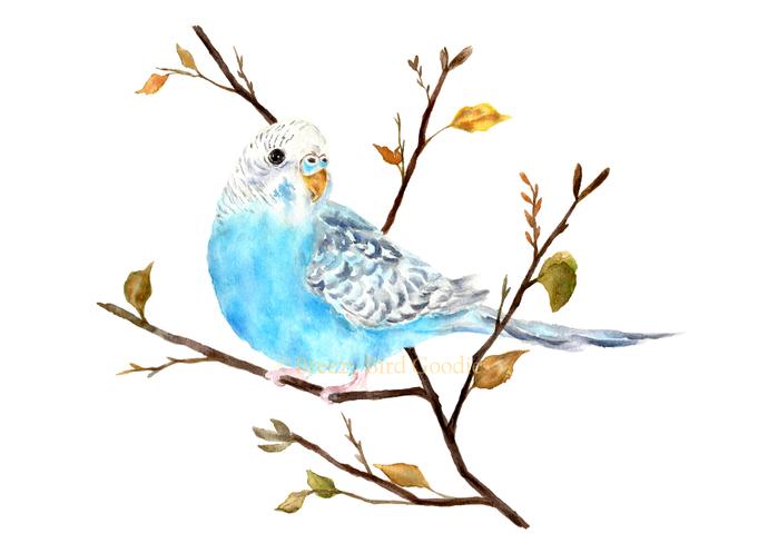 Blue Budgie Print, Budgie Art, Blue Bird Print, Budgie Illustration, Bird Decal,