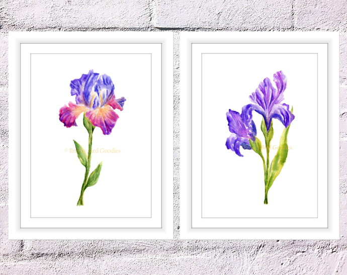 Set Of 2 Iris Flowers Print Flower Gift Art