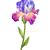 Set of 2 Iris Flowers Print