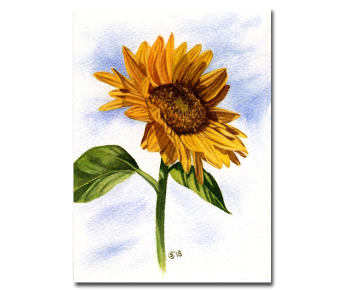 "SUNFLOWER 4 yellow flower watercolor painting Sandrine Curtiss ORIGINAL Art 5x7"""