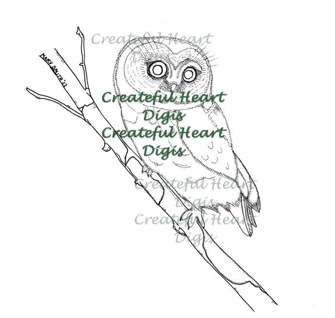 Northern Saw-whet Owl  (hand-drawn, digital, image)