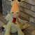 Dragon/Stuffed Animal/Children's Toy/ Dragon Art