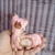 Handmade mini flat teddy bear Alpaca softie plush toy for Blythe Doll