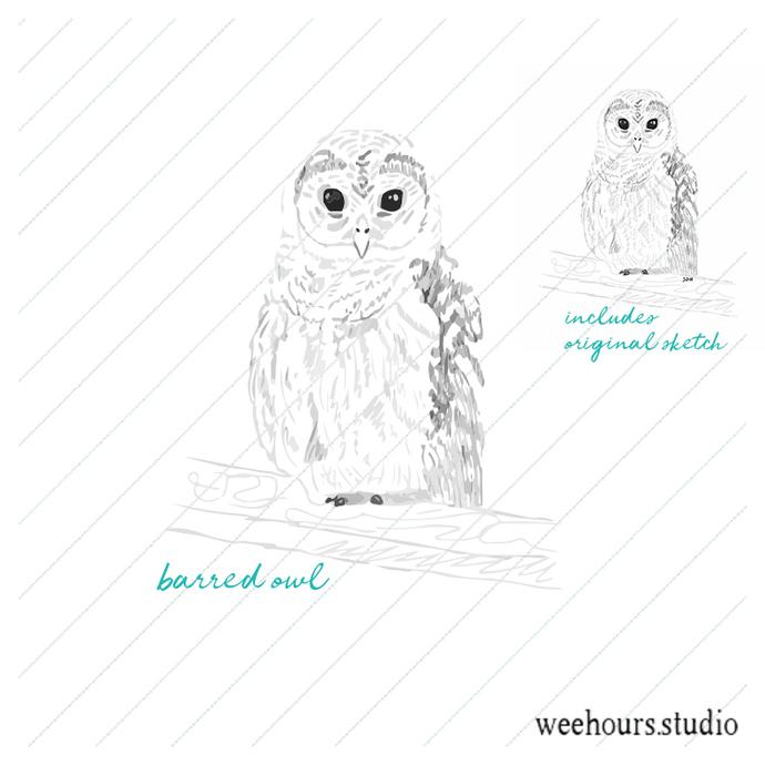 Barred owl sketch, vector for digital scrapbooking, stamps, stationery, handmade