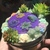 Succulents trinket box