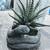 Snake planter