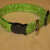 Lime Green Swirls Adjustable Dog & Cat Collars & Martingales & Leashes
