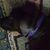 Dark Purple Swirls Adjustable Dog & Cat Collars & Martingales & Leashes