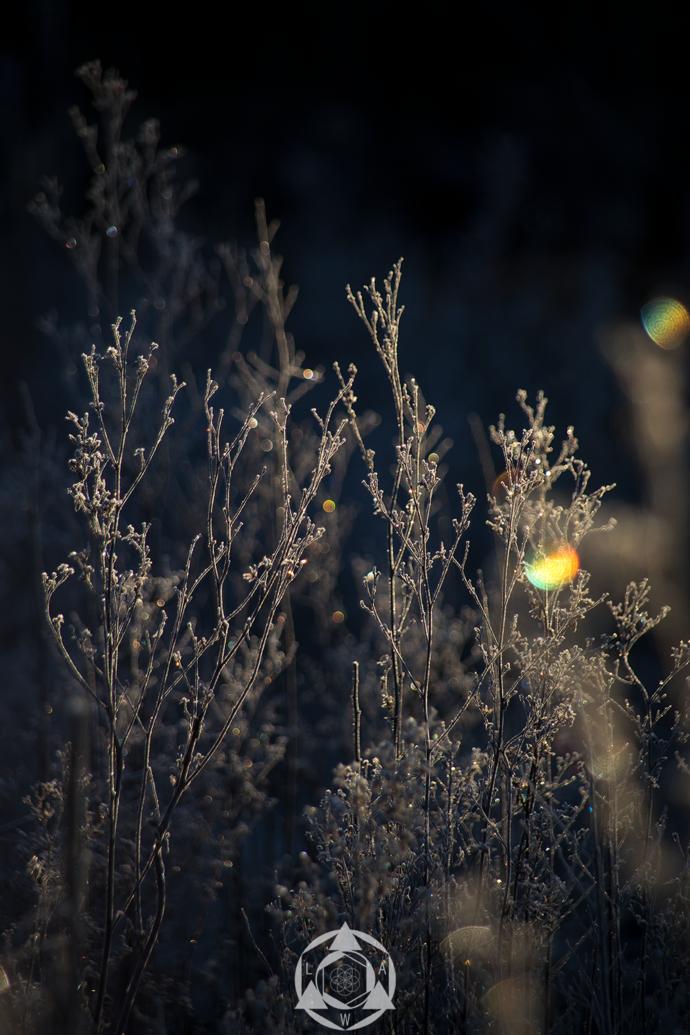 Frozen Little Kingdoms