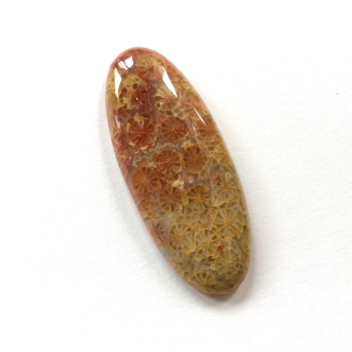 Fossil Coral Gemstone Cabochon Oval 40x16mm FOR ONE