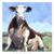 """Whimsical Cow Painting on an 8x8"""" panel, Cow Sitting Farm Animal Art, Farmhouse"""