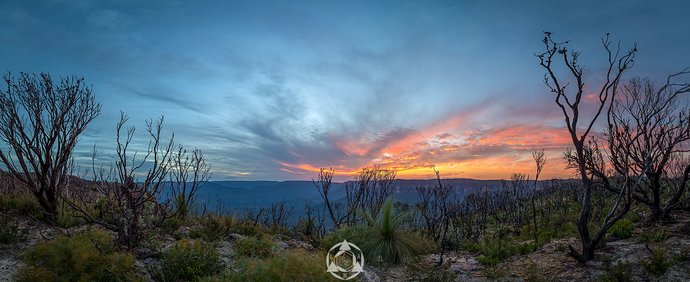 Kings After The Fire - Blue Mountains National Park