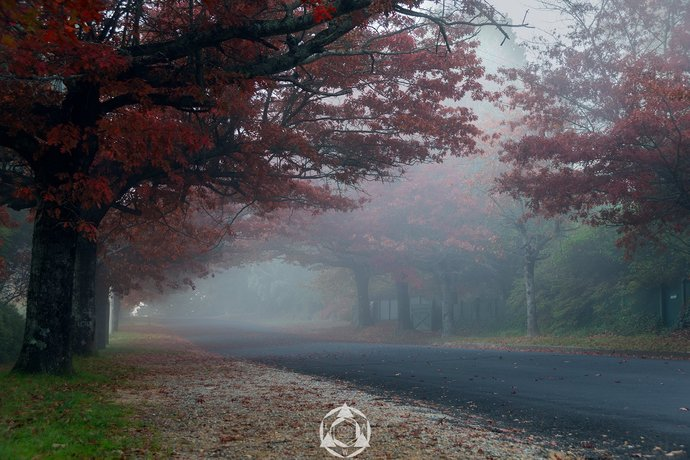 Blackheath in Autumn