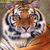 Siberian Tiger Cross Stitch Pattern***LOOK***  ***INSTANT DOWNLOAD***