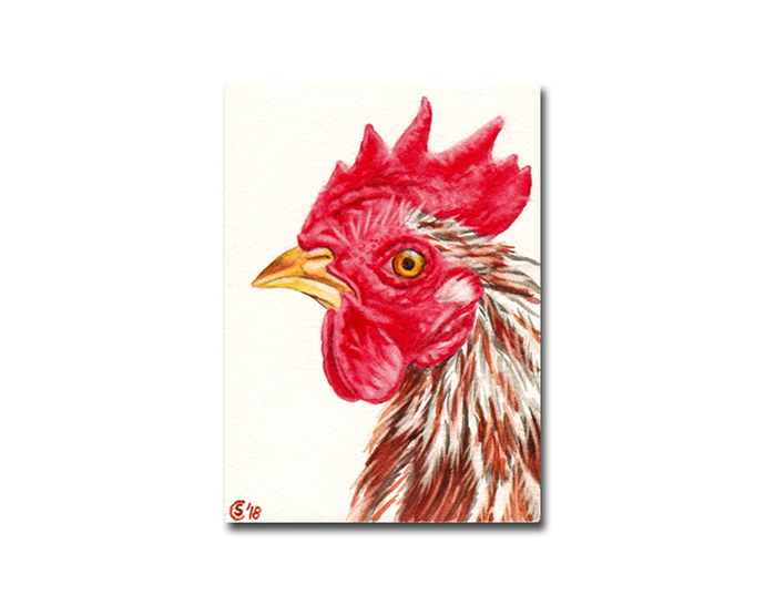 ROOSTER 11 hen chick chicken watercolor painting Sandrine Curtiss ORIGINAL art