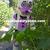 FNAF Funtime Freddy Mascot Costumes,FNAF Funtime Freddy Costumes,FNAF