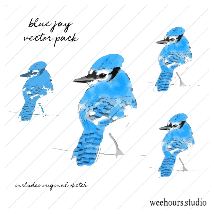 Blue jay watercolor vector for digital scrapbooking, stamps, stationery,