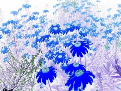 Flowers No. 6