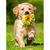 Puppy with flower Diamond Painting DIY kit Canvas Painting Wall Art Mosaic