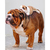 Bulldog with puppy Diamond Painting DIY kit Canvas Painting Wall Art Mosaic