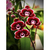 Red flowers Diamond Painting DIY kit Canvas Painting Wall Art Mosaic Painting
