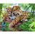 Tigers family Diamond Painting DIY kit Canvas Painting Wall Art Mosaic Painting