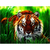 Tiger in grass Diamond Painting DIY kit Canvas Painting Wall Art Mosaic Painting