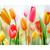 Colorful flowers Diamond Painting DIY kit Canvas Painting Wall Art Mosaic