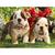 Dog Puppies Diamond Painting DIY kit Canvas Painting Wall Art Mosaic Painting