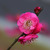 Pink flower Diamond Painting DIY kit Canvas Painting Wall Art Mosaic Painting