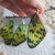 Butterfly earrings, Butterfly wing earrings, Butterfly wings Canary yellow green