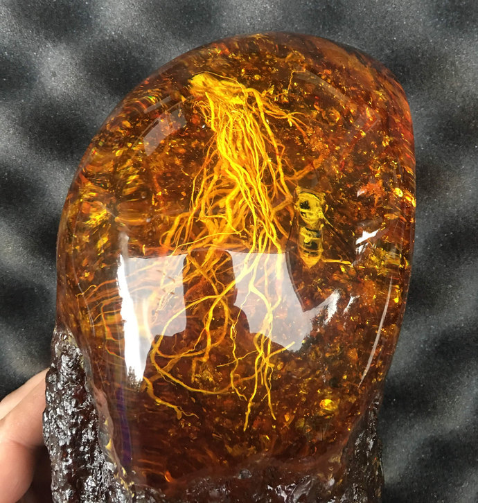 Very Large Amber Piece with Insect and Roots