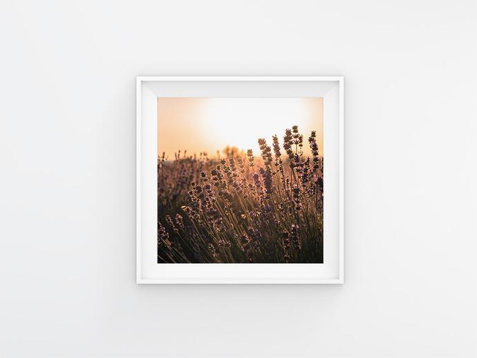 Lavender Flowers, French Lavender, Bohemian Wall Art, Summer Print Poster,