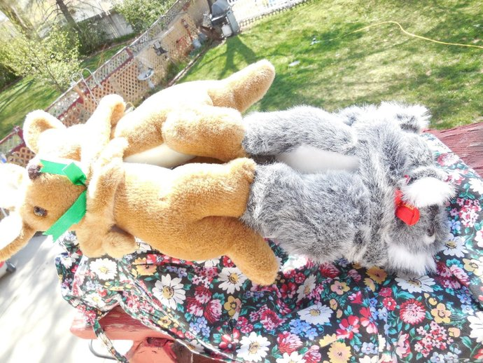 Australia  Souvenirs stuffed animals Joined Hugging Pairs Koala and Kangaroo,
