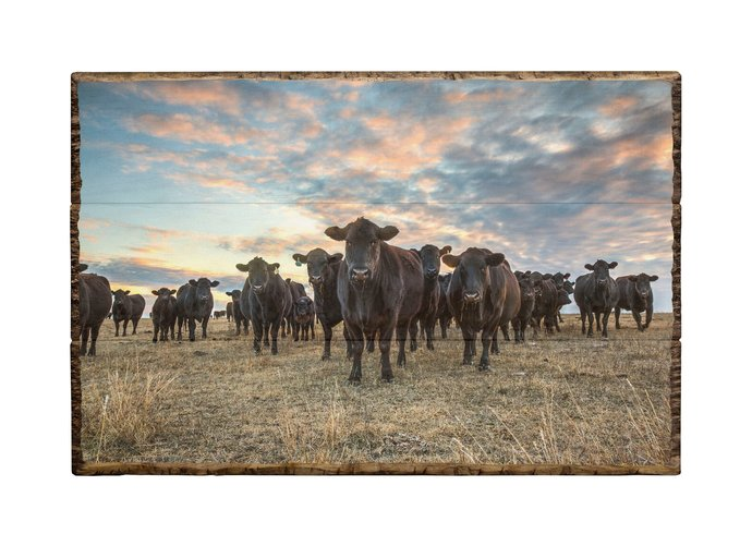 Wood photo pallet print, western wall art, pallet art, wood plank photo, cow