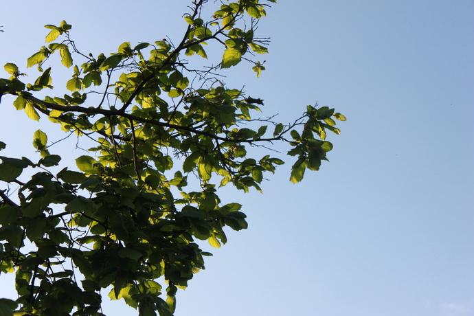 Photos - tree leaves