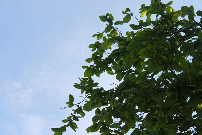 Photos - tree leaves