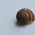 Photos - snail