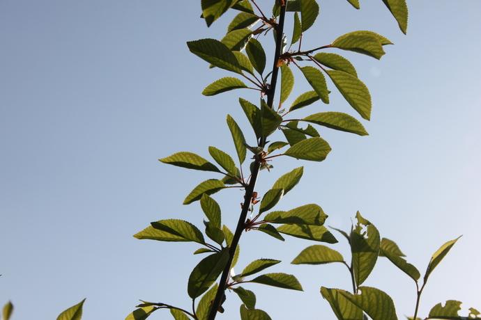 Photos - leaves
