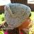 Knitted Cat Hat Handmade Cat Ears Knit Beanie Girls Toddler Children Women