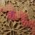 Pink sequence trim (1/2 yard)