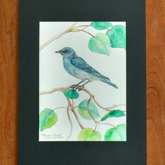 MOUNTAIN BLUE BIRD, Original Bird Painting in Watercolor on Cotton Paper by