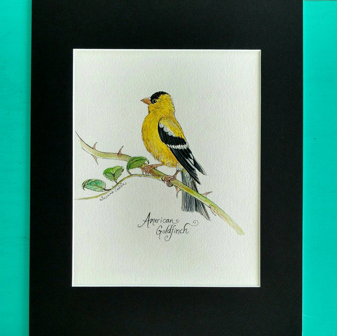 AMERICAN GOLDFINCH BIRD, Original Watercolor Painting on Paper by Susana Caban,