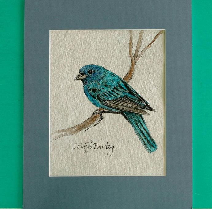 INDIGO BUNTING BIRD, Original Watercolor Painting on Paper by Susana Caban, Bird