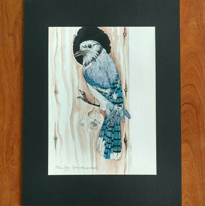 BLUE JAY Original Bird Painting in Watercolor on Cotton Paper by Susana Caban,