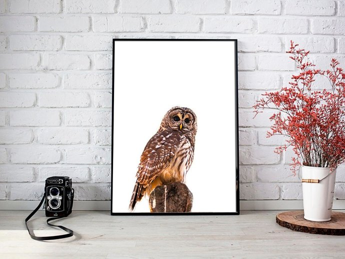 Digital Brown Owl Print, Digital Printables Wall art poster, Digital Color