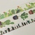 3 Rolls Limited Edition  Washi Tape : Cactus Plants