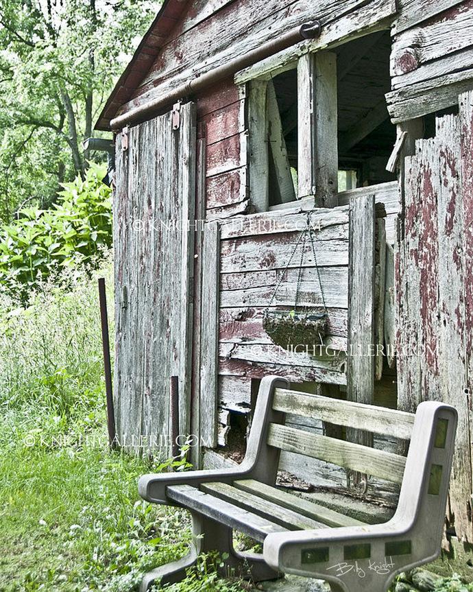 Barn Portrait: Contemplation