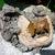Florida Calcite, Natural Matrix Awesome Multi -Specimened Gem Fossil, Mineral