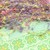Boho Gypsy Specialy FLOWER Kollage Pop Trim - CORAL REEF - YELLOW/PURPLE/CORAL
